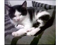 Lovely kitten for sale!!!