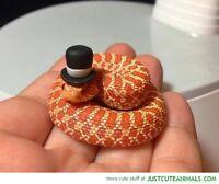 Reptile Petsitting