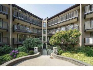 $1800 Apt 2 bed 1 bath apt 875ft2 Lougheed Mall Area