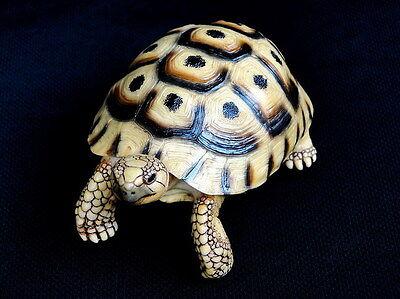 Testudo graeca--Spur-thighed tortoise model replica ornament sculpture turtle