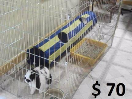 Folding Indoor / Outdoor Rabbit Playpens Mount Waverley Monash Area Preview