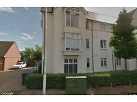 1 bed chelmsford for 1 bed romford