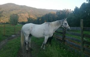 Well Broke Ranch Gelding