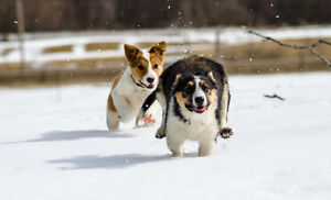 Pet sitting by a Certified Veterinary assistant Cornwall Ontario image 4