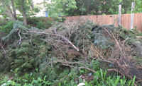 LOW RATE TREE CUTTING, BRANCHES ,JUNK REMOVAL BOB 780 908 7090