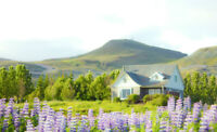 Sustainable living and volunteering in a farm in Iceland