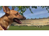 Dog Walking and Day Care-Bath