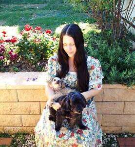 Quality Affordable Dog Sitting at Laya's Lap Dogs in Quakers Hill Quakers Hill Blacktown Area Preview