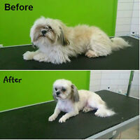 Dog grooming & Spa Wowww!  Special Summer Package