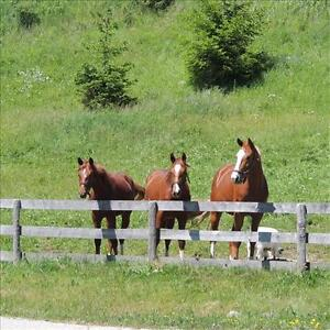 2011 HANOVERIAN REG. CANADIAN SPORT HORSE  $19,000 Stratford Kitchener Area image 3
