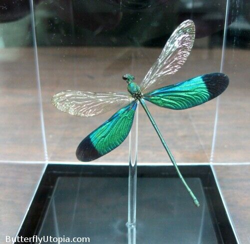 Real 3D Framed Metallic Green Dragonfly / Damselfly - Table Top