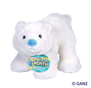 WEBKINZ-ARCTIC-POLAR-BEAR-January-2014-PET-OF-MONTH-NWT-also-comes-wPOM