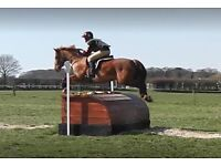 Experienced Rider - available from May