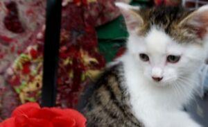 Magnifiques chatons! Traitement parasitaire complet!