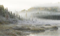 The Natural Beauty of Algonquin
