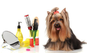 I'm looking to be a apprentice at a groomers!