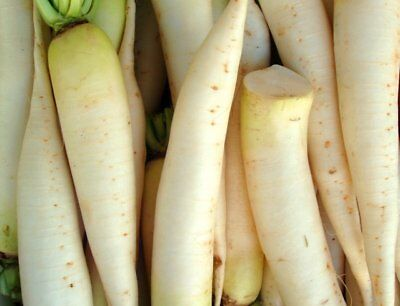 Radish, Daikon Japanese Minowase 1/2 Oz Heirloom Non Gmo  Seed   FREE Shipping for sale  Shipping to Canada