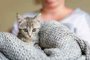 Lavender RESCUE kitten vet work INCLUDED Morley Bayswater Area Preview