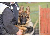 Matschenka Dog Training and Behaviour Centre