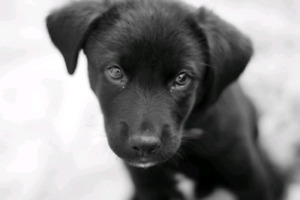 Looking for an Acerage Puppy