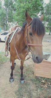 BOMBPROOF Kids Horse