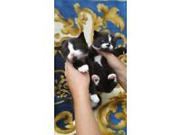 Brown and white kittens. .