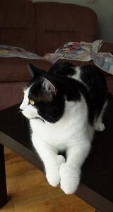 chat stérilisé, vacciné et vermifugé