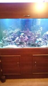 190 gal saltwater tank with lots of corals and fish. Kitchener / Waterloo Kitchener Area image 2