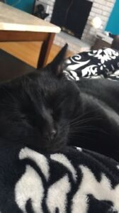 1 Year old male cat for rehoming