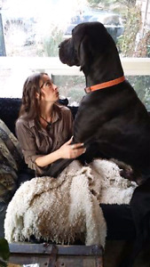 Spring is here. Big bad and beautiful Great Dane puppies