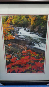 Brand new. never used. Beautiful nature framed artwork.