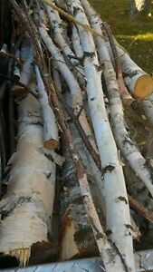 BIRCH sticks/logs for crafting ~or whatever you can think of! London Ontario image 1