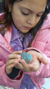 NEW ARRIVE BABY PARROTLET H.F. AVAILABLE BOTH STORE-CENTRAL PET