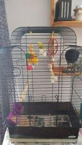 ONE YEAR OLD BUDGIE AND CAGE!!!!!!!!!!! Cambridge Kitchener Area image 1
