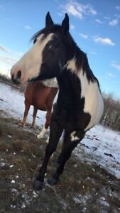 !!Horses for sale !!