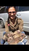 Animals Out GTA - Wildlife Control