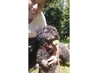 Dawn's Walkies - Thoughtful & Experienced Professional Dog Walking Service