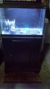 Fish tank with black background and black stand