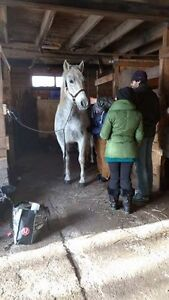Equine First Aid Courses Starting to book for Fall Season