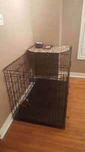 MidWest Life Stages Double Door Dog Crate with Divider