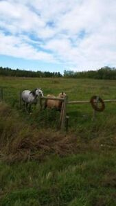2 Building Lots at 2.45 acres each Strathcona County Edmonton Area image 1