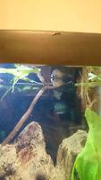 Hatchet Fish & Banjo Catfish
