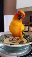 Bébés perroquet disponible