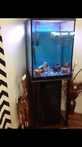 40 Gallon Fish Tank on Stand