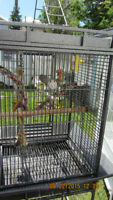 Large Flight Cage For Sale