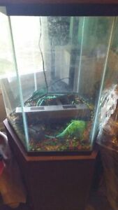 Hexagon tank kijiji free classifieds in ontario find a for Hexagon fish tank lid
