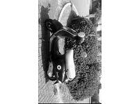 Black Vespa Piaggio 50cc
