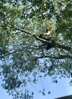 Arbor All Tree Care! Same Day Service! Call Today 780 288 0698
