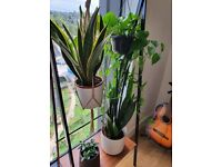 Great condition home plants with pots and plant rack from Patch