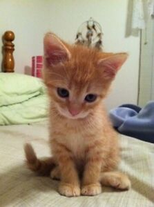 Looking for a kitten
